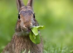 Зайцы, кыш от яблонь и груш!