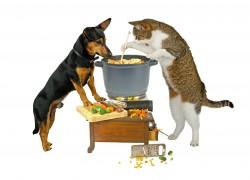 Можно ли кошку кормить собачьим кормом