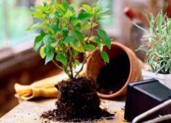 Проблемы при выращивании растений