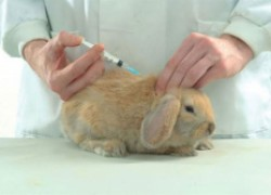 Прививки осенним крольчатам