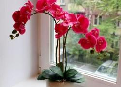 Правила перевалки орхидеи в горшок побольше