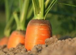 Интересный способ выращивания овощей на песке