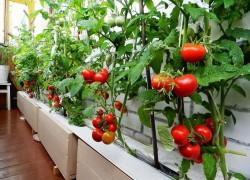 Хотите выращивать овощи зимой? выращивайте на здоровье!
