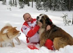 Зимние игры с собаками