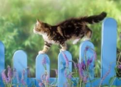 Кошка, гуляющая сама по себе