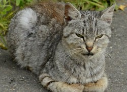 История о том, как старая кошка привела себе замену