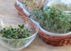 Зелень на подоконнике за пять минут: проращивание в гидрогеле