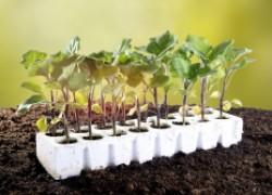 10 правил для выращивающих рассаду