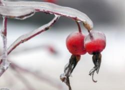Ледяной дождь: сюрпризы нынешней зимы