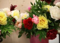 Новинки цветоводства от коллекционера олега киценко