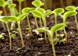 Не взошли семена? как ускорить новые всходы