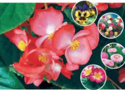 Какие цветы нужно сеять на рассаду в феврале