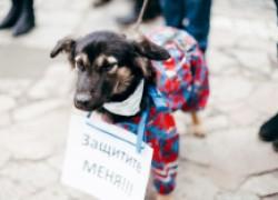 Новый закон о защите животных