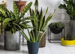 Вопросы и ответы по комнатным растениям