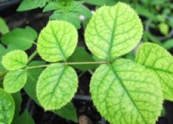 Как определить дефицит микроэлементов у растений