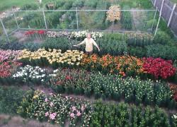 Вера Котова: «лилии вернули мою семью домой»