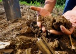 Можно ли улучшить песчаную почву