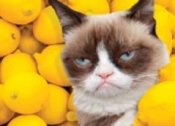 Каких «ароматов» боится кошка