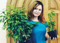 Как меньше чем за год вырастить фикусовое дерево