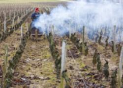 Спасение винограда от весенних заморозков