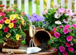 О посевах и глубине заделки семян в почву
