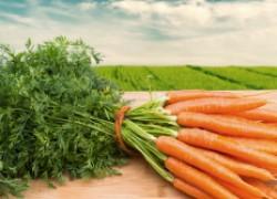 Что от вас потребует морковка