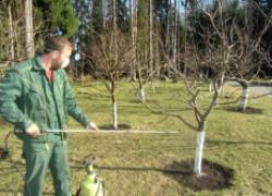 Биопрепараты, которые защитят сад без химии