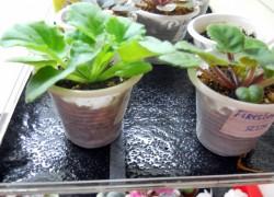 Поливочные маты – идеальный способ полива растений в горшках