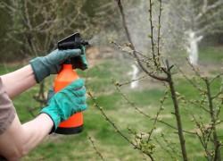 Календарь весенних обработок сада от основных болезней