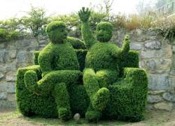 Вечнозеленый самшит идеален для живой изгороди