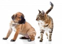В россии могут запретить свободную продажу кошек и собак