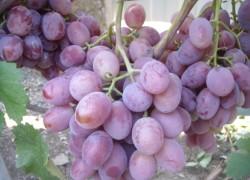 Граф монте-кристо по-виноградному