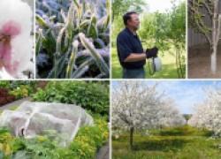 Антифриз для растений, или как защитить сад от заморозков