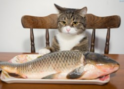 «чужие», или чем можно заразиться, поедая рыбу