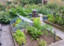 Десант рассады на огород