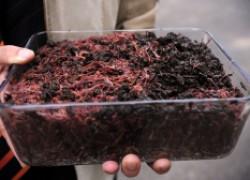 Как сделать биогумус самостоятельно