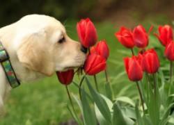 Садовые растения, опасные для животных