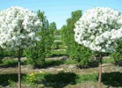 Совместимость деревьев между собой и с другими растениями