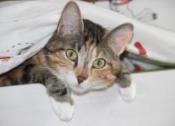 Кошачья чумка унесет 80 % кошачьих жизней