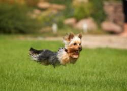 Безопасные породы собак для аллергиков