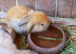 Как помочь кроликам в жару
