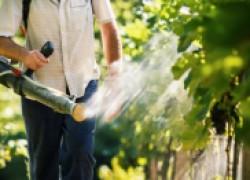 Биообработки винограда: что это такое?