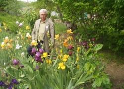 Радужный мир ирисов, пионов и гибискусов Олега Киценко