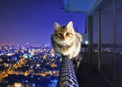 Действительно ли у кошки девять жизней?