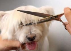 Пять полезных советов ухода за шерстью собаки