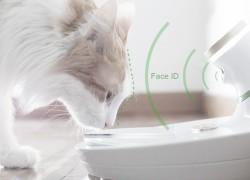 В Италии разработали «умную миску» для животных