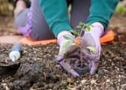 Что успеет вырасти до осени