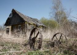 Владельца могут лишить земли за сорняки
