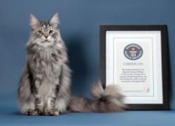 Кошки, которые занесены в Книгу рекордов Гиннеса