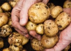 Неотложка для картошки